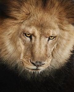 Lion No. 3
