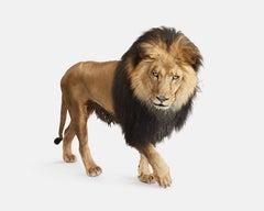 Lion No. 4