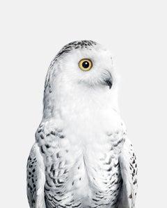 Snowy Owl No. 1