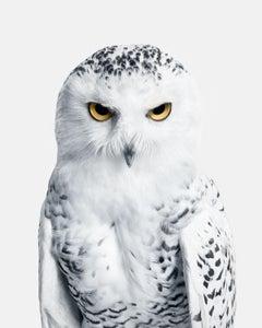 Snowy Owl No. 3