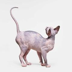 Sphinx Cat No. 2