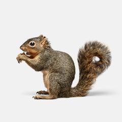 Squirrel No. 1