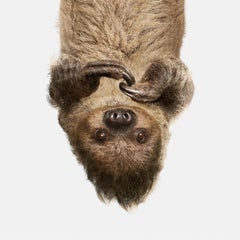 Upside Down Sloth