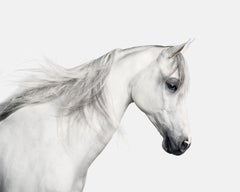 White Arabian Horse No. 2