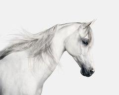 White Arabian Horse No. 2