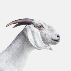 White Goat No. 1