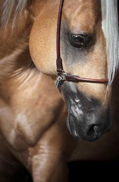 Caritate (Horse Portrait, Equine Beauty)