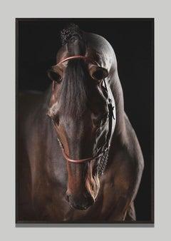 Domino, Afresco, Horse Portrait