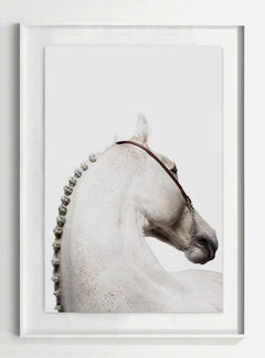 Domum, Afresco, Horse Portrait