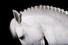 Equestrian Beauty #11
