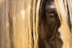 Equestrian Beauty #13
