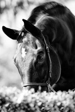Equestrian Beauty #14