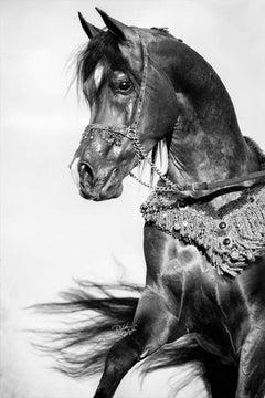 Equestrian Beauty #16
