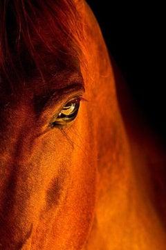Equestrian Beauty #3