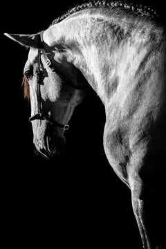 Equestrian Beauty #4