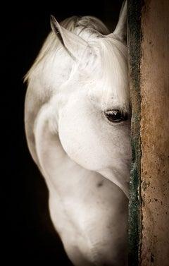Equestrian Beauty #9