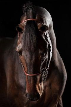 Raphael Macek - Domino (Horse Portrait, Afresco series)