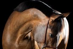 Serenitas, Horse Portrait, Equine Beauty