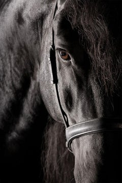 Utilita I, Wellington, United States, Horse Portrait, Equine Beauty
