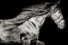 Ventus Netherlands, Horse Portrait