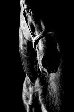 Proprius, The Netherlands, Horse Portrait, Equine Beauty
