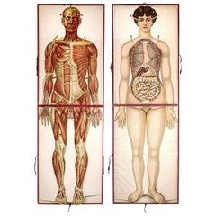 Rare 1890s Life-Sized Pilz Anatomical Flap Manikins