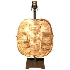 Rare Albino Tortoise Shell, Now as a Lamp