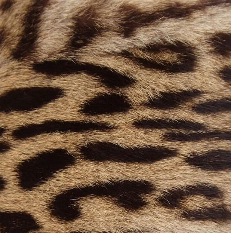 Rare early 1940s Ocelot Fur Pillbox Hat Previously Owned By Jolie Gabor In Excellent Condition For Sale In London, GB