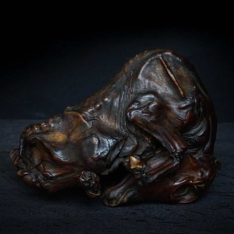 Rare Mummified Calf Foetus  In Excellent Condition For Sale In Haarlem, NL