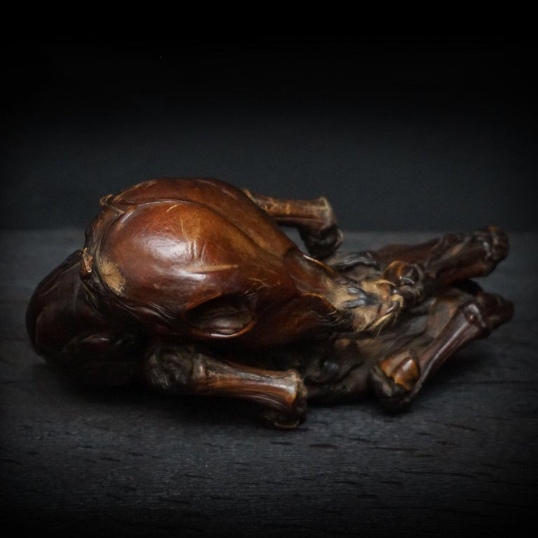 Rare Mummified Calf Foetus  For Sale 1