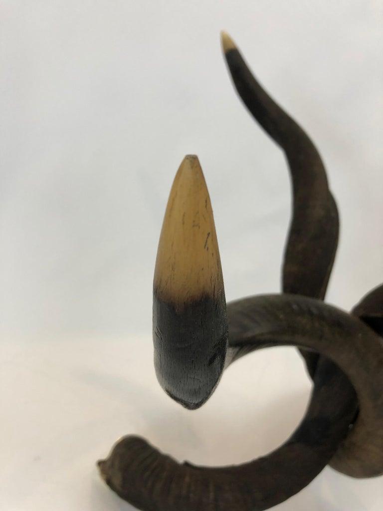 Rare Organic Handmade Kudo Horn Based Coffee Table For Sale 1