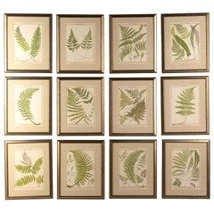 Rare Set of 12 British Fern Chromolithographs by Francis George Heath