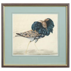 Rare Set of Five Mid-18th Century Water Colors of Birds