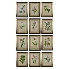 Rare Set of Twelve Elizabeth Blackwell 1st Edition Botanical Engraving Prints