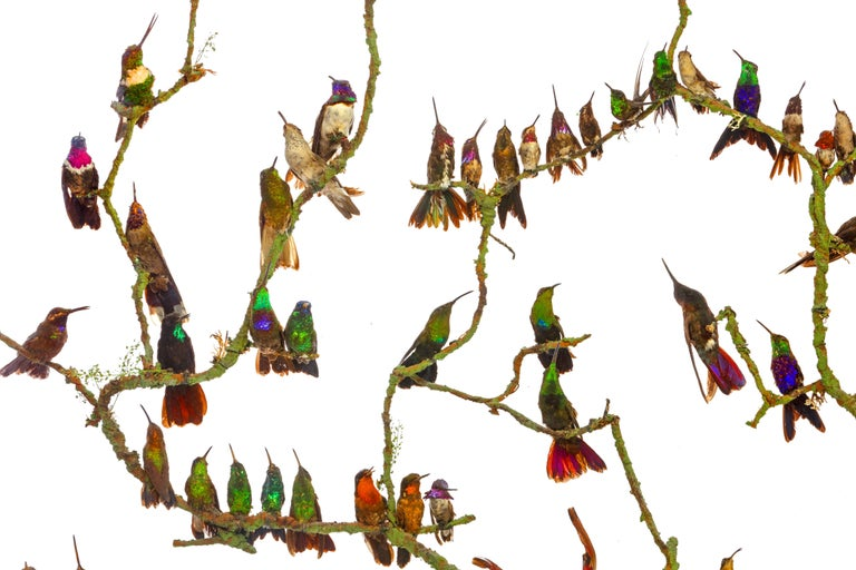 High Victorian Rare Victorian Firescreen with Taxidermy Hummingbirds by Henry Ward For Sale