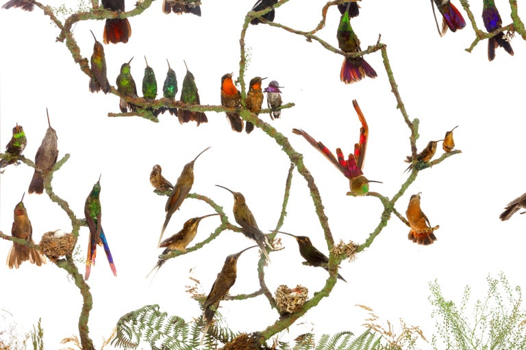 English Rare Victorian Firescreen with Taxidermy Hummingbirds by Henry Ward For Sale