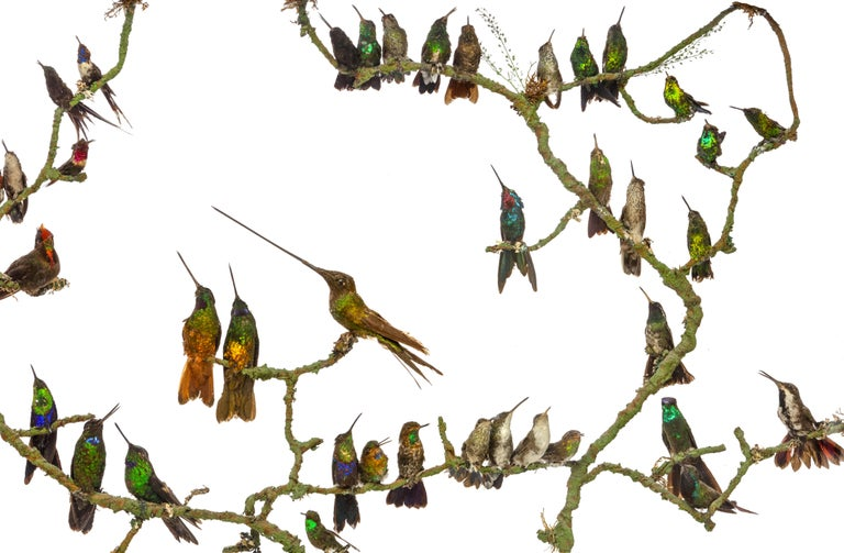 Rare Victorian Firescreen with Taxidermy Hummingbirds by Henry Ward In Good Condition For Sale In Amsterdam, NL