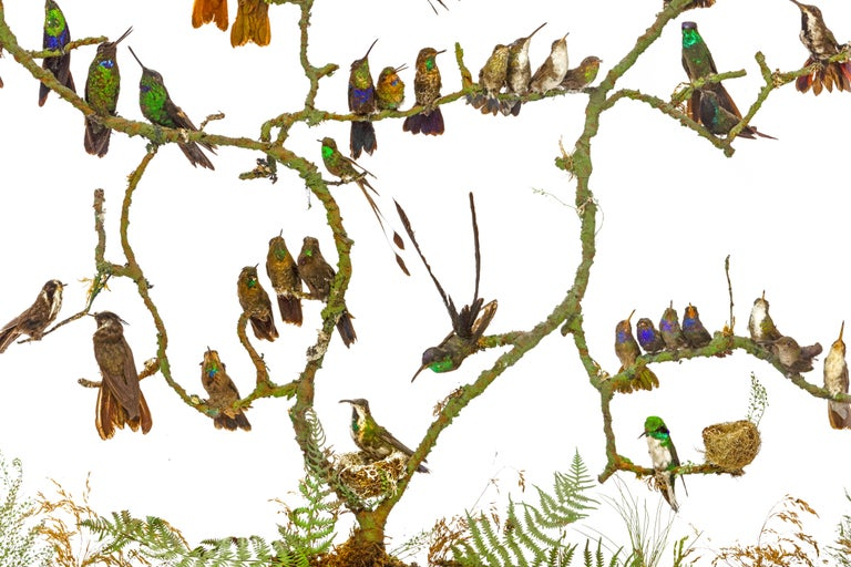 19th Century Rare Victorian Firescreen with Taxidermy Hummingbirds by Henry Ward For Sale