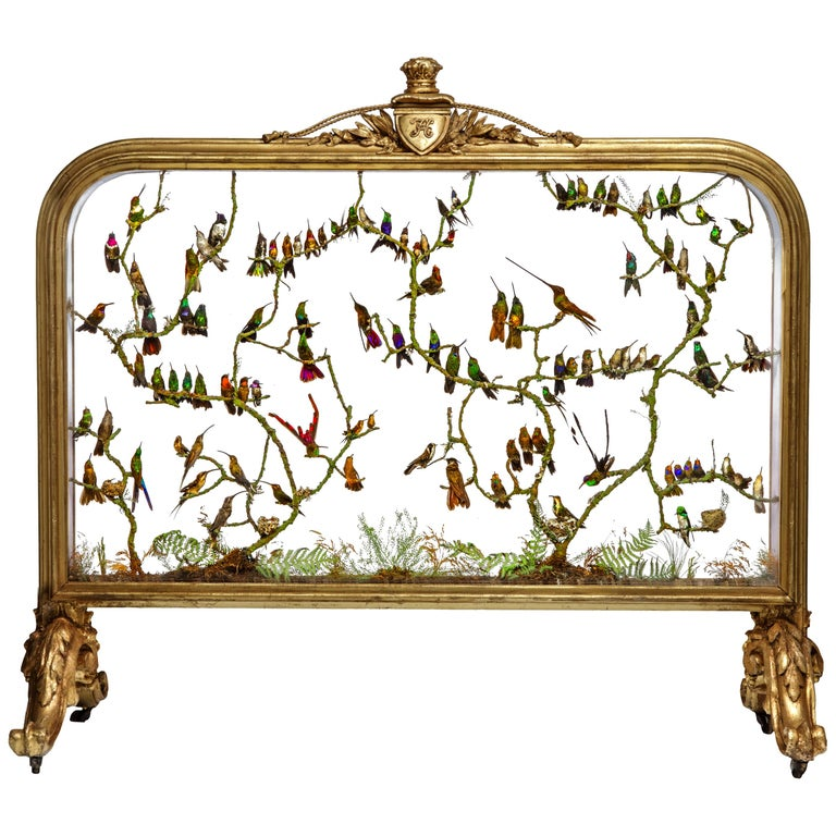 Rare Victorian Firescreen with Taxidermy Hummingbirds by Henry Ward For Sale