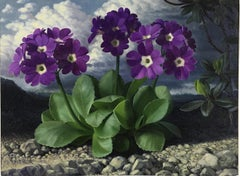 Auricula - 20th Century British Botanical oil painting by Raymond Booth