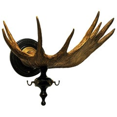 Real Vintage Moose Antlers with Hooks 1920s, Norway