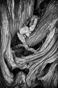 """""""Erosion #1"""", black and white, abstract, photo, tree, roots, bark, landscape"""