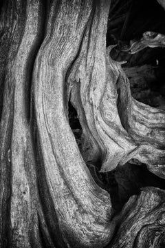 """Erosion #2"", photograph, tree, roots, bark, landscape, black and white"