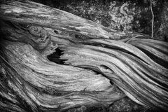 """Erosion #3"", photograph, tree, roots, bark, landscape, black and white"