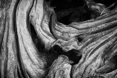 """Erosion #4"", photograph, tree, roots, bark, landscape, black and white"