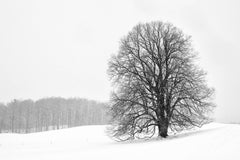 """Lonely Tree"", photograph, black and white, winter, landscape, snow, New England"