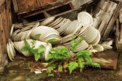 """""""Stacked"""", color photograph, abandoned, china, factory, dishes, ferns, green"""