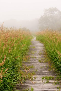 """Walk This Way"", color photograph, landscape, boardwalk, foggy, sea grass, green"