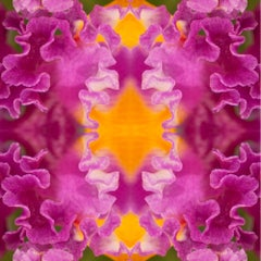 Laced III, Botanical Photograph, Pink, Orange, Flowers, Limited Edition