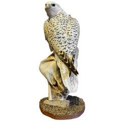 Recently Made Taxidermy Gyr Falcon